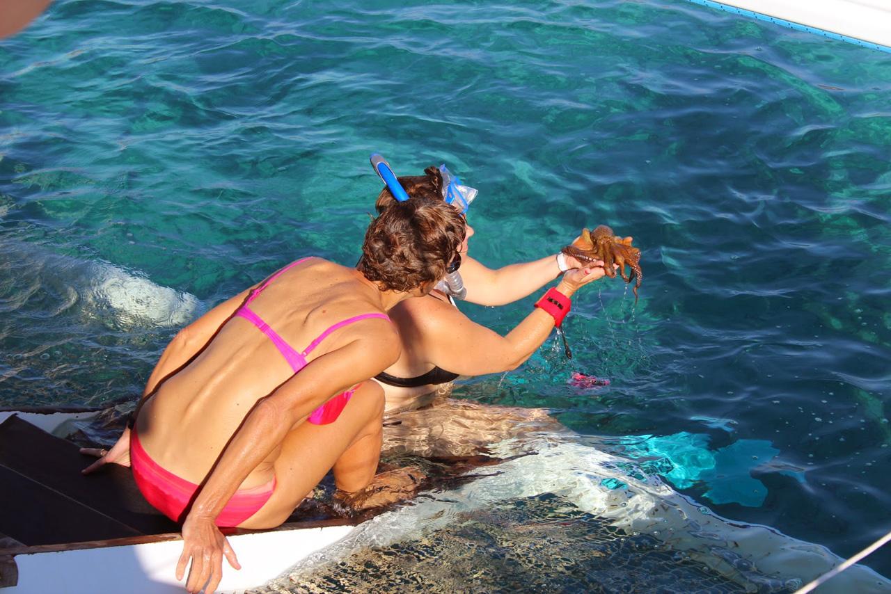 """A la """"pêche"""" au poulpe"""