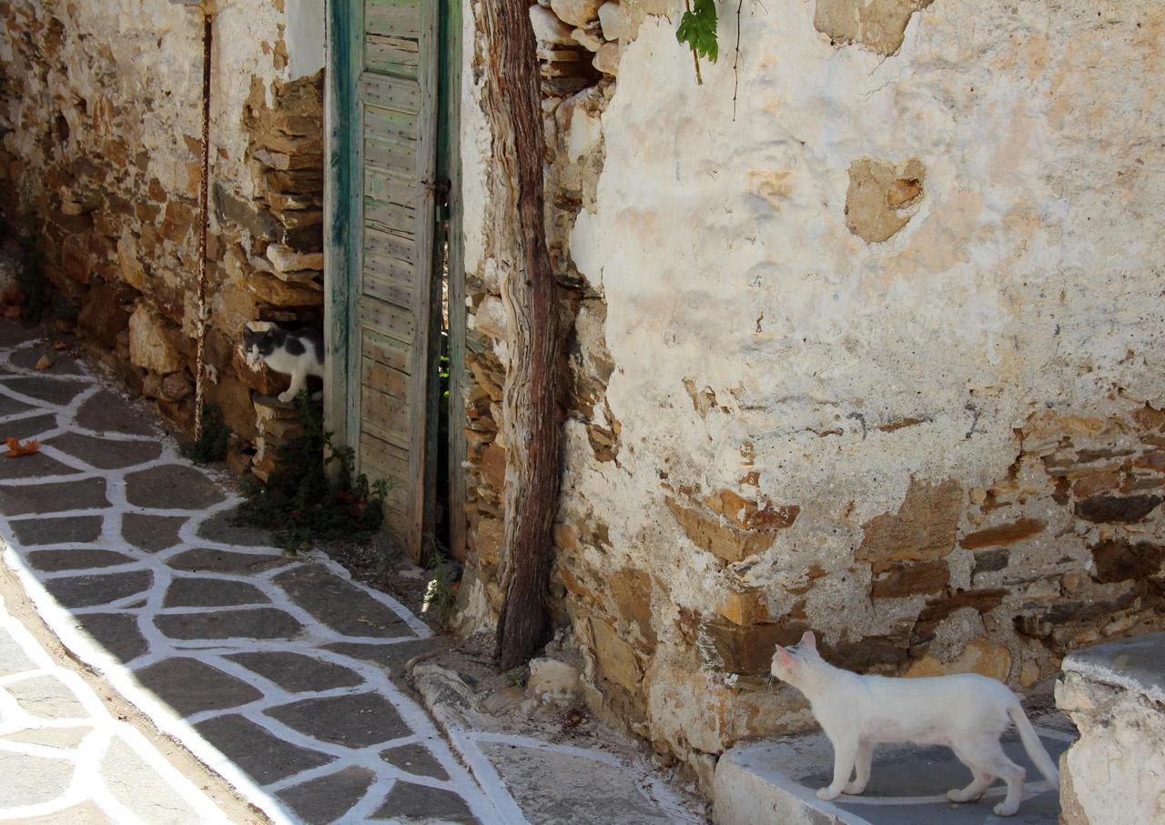 Chats dans les ruelles de Marpissa à Paros